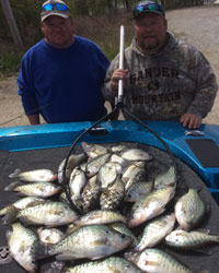 Crappie pictures 2014 pg1 for Kentucky lake fishing guides